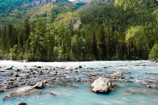 Mountain river flowing in the forest. blue kucherla river in belukha national park, altai mountains, siberia, russia