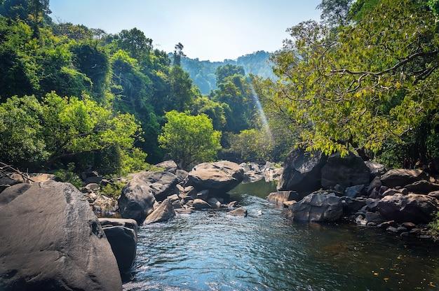 숲 속의 산에 흐르는 산 강. 자연 구성입니다.