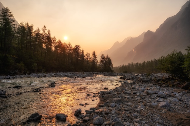 A mountain river flows along mountains ridge, coniferous trees grow along the coast