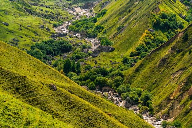 Горная река в овраге