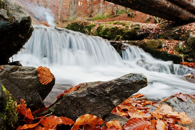 Пороги горной реки на величественном лесе осени с упаденными листьями под деревянным мостом.