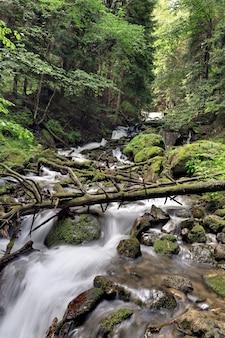コーカサス山脈地域の森を流れる急流の山岳河川