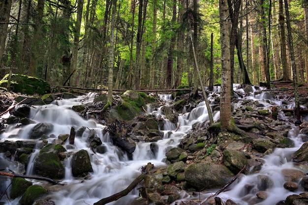 Горная река с быстрым течением в лесу в районе кавказских гор.
