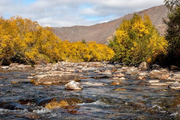 Горная река с камнями и осенними кустами по берегам желтые листья на деревьях