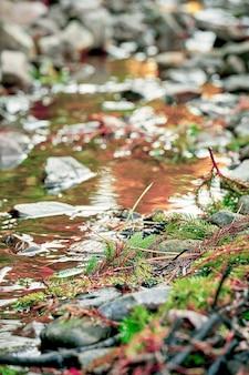 Горная река с камнями. селективный акцент на сосновые ветки. малая глубина резкости