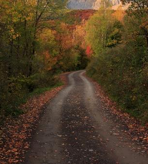 Горная дорога между деревьями с осенними цветами