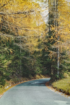 Mountain road surrounded by colorful trees in autumn season