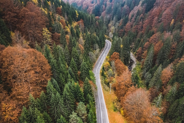Горная дорога через лес
