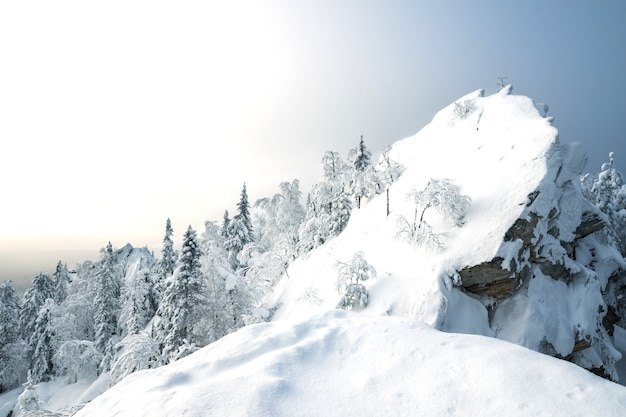 夜明けに白いふわふわの雪と雪に覆われた森に覆われた山、岩。