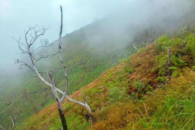열 대 섬에 산 경사면. 무성한 초목과 마른 나무 줄기. 아침 안개