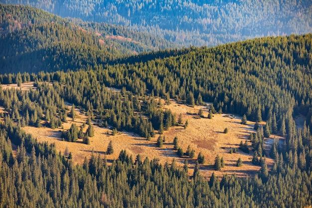 日の出の松林に覆われた山の斜面