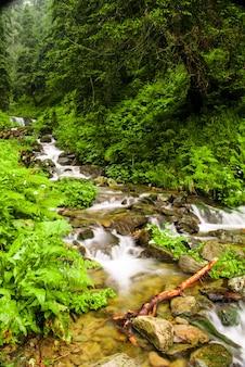 カルパティア山脈の緑の夏の森の渓流