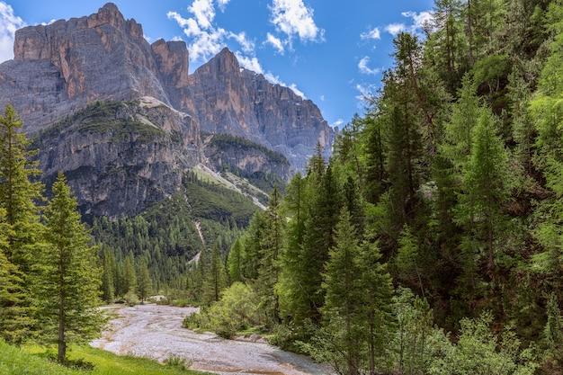 Горный ручей в итальянских доломитовых альпах в окружении свежего леса