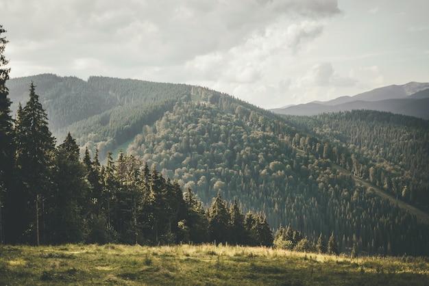 山の夏の風景。緑の山々を背景に背の高い木々が生い茂る林帯。山で休んで再起動。高品質の写真