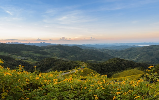 Mountain sunrise landscape with mexican sunflower blooming in meahongson, thailand.