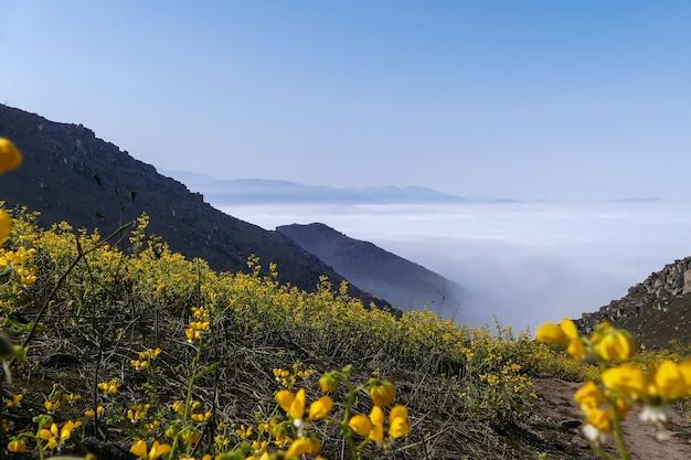 산 계곡 꽃 풍경 노란색 꽃