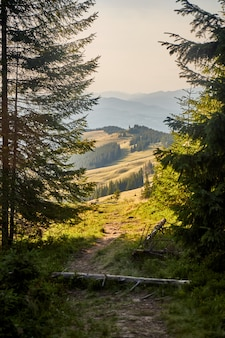 Mountain view from forest. evening sunlight. forest landscape in the carpathian mountains