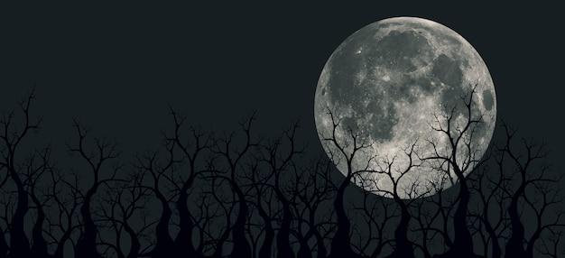 마운틴 뷰, 파노라마 야경, 숲 위의 보름달