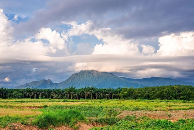 青い空と白い雲と夕方の光の緑の草と山の景色