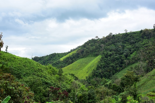 Mountain views and bright corn fields. on the day of dew. mountains and corn field in the