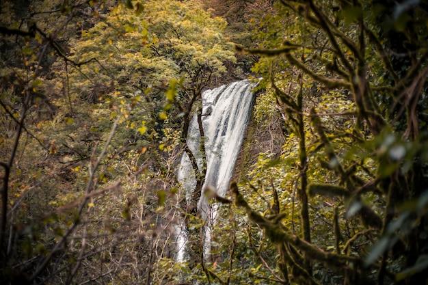 ジャングルの中の山の滝