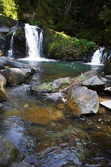 Горный водопад в скалистом каньоне окружен зеленым лесом, прохладной и свежей природой летнего пейзажа. карпаты