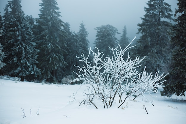 Mountain winter landscape. beautiful nature and panoramic trees, in mountains.