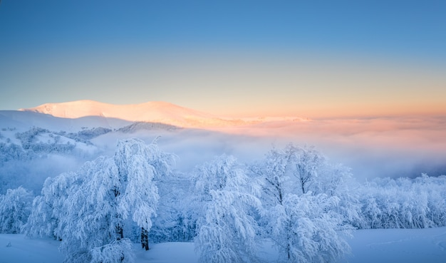 Mountain winter landscape. snow-covered trees on top of the mountain at dawn.