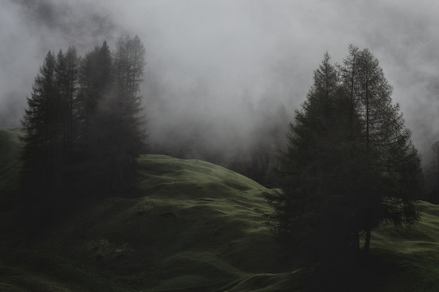Mountain with pine trees covered with fogs