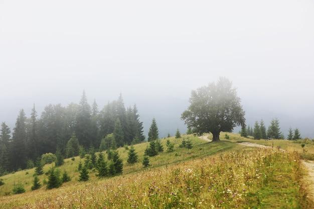 여름에 산악 시골입니다. 거리에 오르막 길. 구불구불한 언덕 위의 나무들. 멀리 능선. 하늘에 구름입니다. carpathians의 아름 다운 시골 풍경입니다. 우크라이나, 유럽.