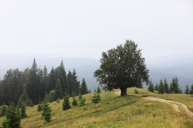 여름에 산악 시골입니다. 거리에 오르막 길. 언덕 위의 나무들. 멀리 능선. 하늘에 구름입니다. carpathians의 아름 다운 시골 풍경입니다. 우크라이나, 유럽.