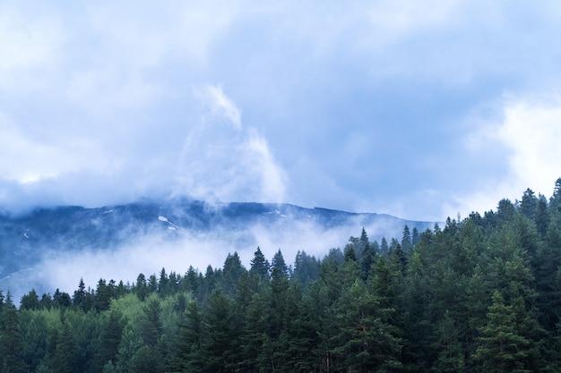 Горы и лес в облаках и тумане