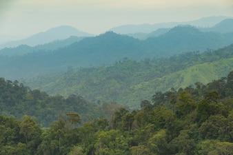 Mountains and forests in the morning.