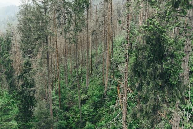 Горы красивые облака солнечный лес