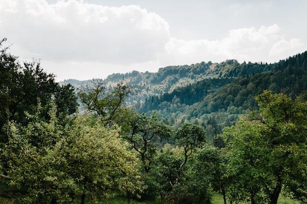Горы карпаты украина. туман уступ горы, лето, парк, деревья, горы на горизонте. солнце светит. пейзаж, пейзаж, природа, зелень. солнце садится за облака