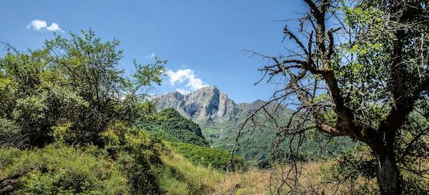 Горы, покрытые зелеными деревьями и травой