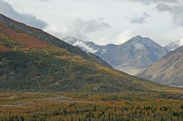 Mountains forest countryside trees alaska
