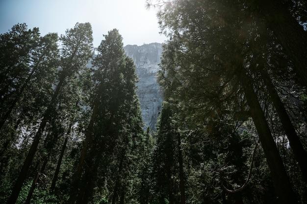 ヨセミテ国立公園のモバイル画面の壁紙を見下ろす山々