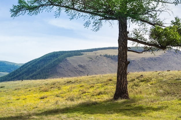Mountains stones landscape and coniferous tree on blue sky background.