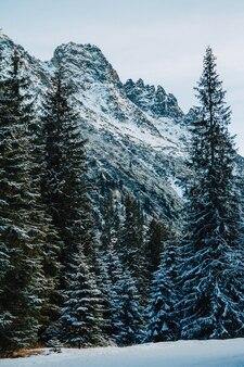 雪に覆われた山の木々。木々は凍っています。背景に。