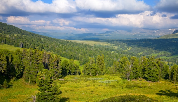 Горы с кедровым лесом