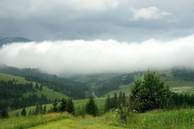 緑の森の風景と山