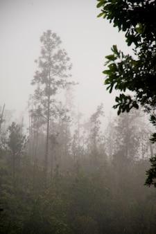 Mountian pine ridge reserve, rain forest