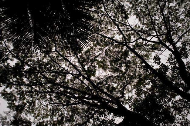 마운틴 파인 릿지 리저브, 나무