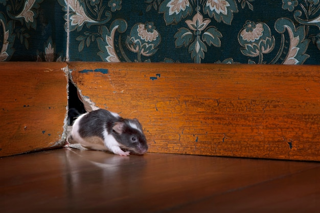 昔ながらの豪華なルーンの穴から抜け出すマウス