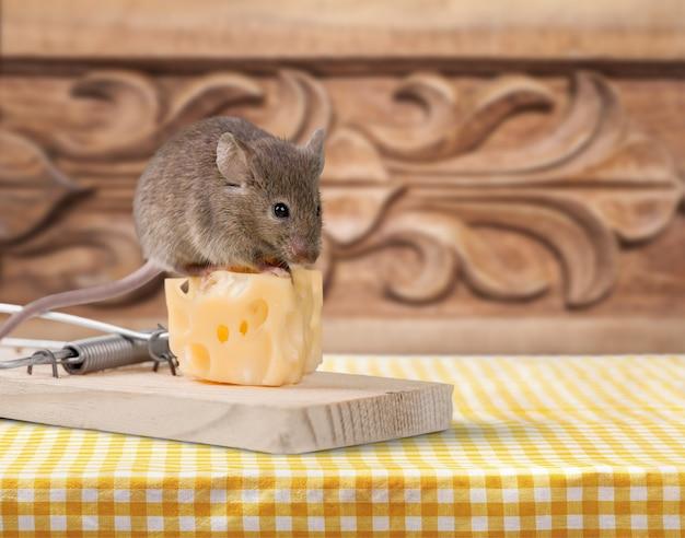 チーズとマウスを背景にネズミ捕り