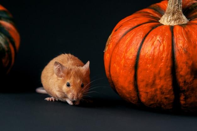 暗い背景のハロウィーンのコンセプトにカボチャとマウス