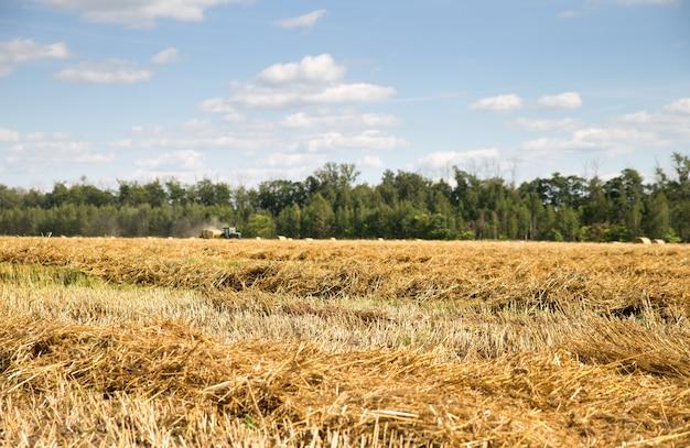 Скошенная пшеница и солома в поле