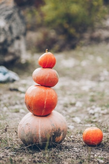 Mr. Pumpkin is outstanding in his field