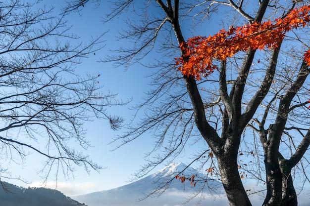 일본의 가와구치 코 호수에서 가을에 후지산. 프리미엄 사진